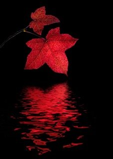 'Red Leaf' by Margaret Whittaker LRPS